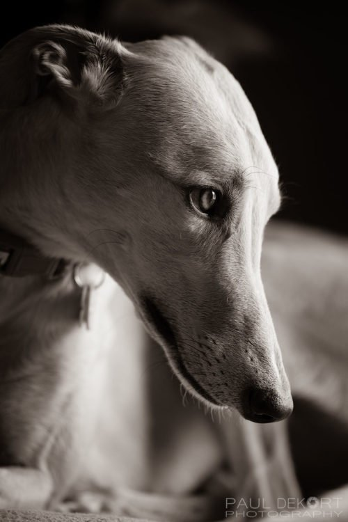 greyhound_sydney_web_bw