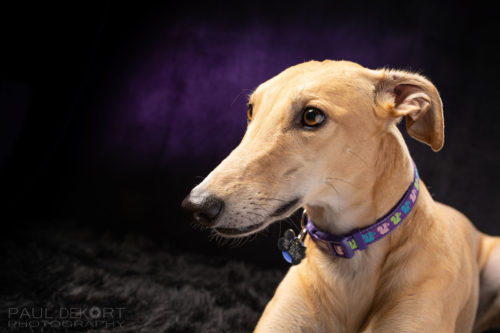 Sydney_Greyhound_Web_1600_3